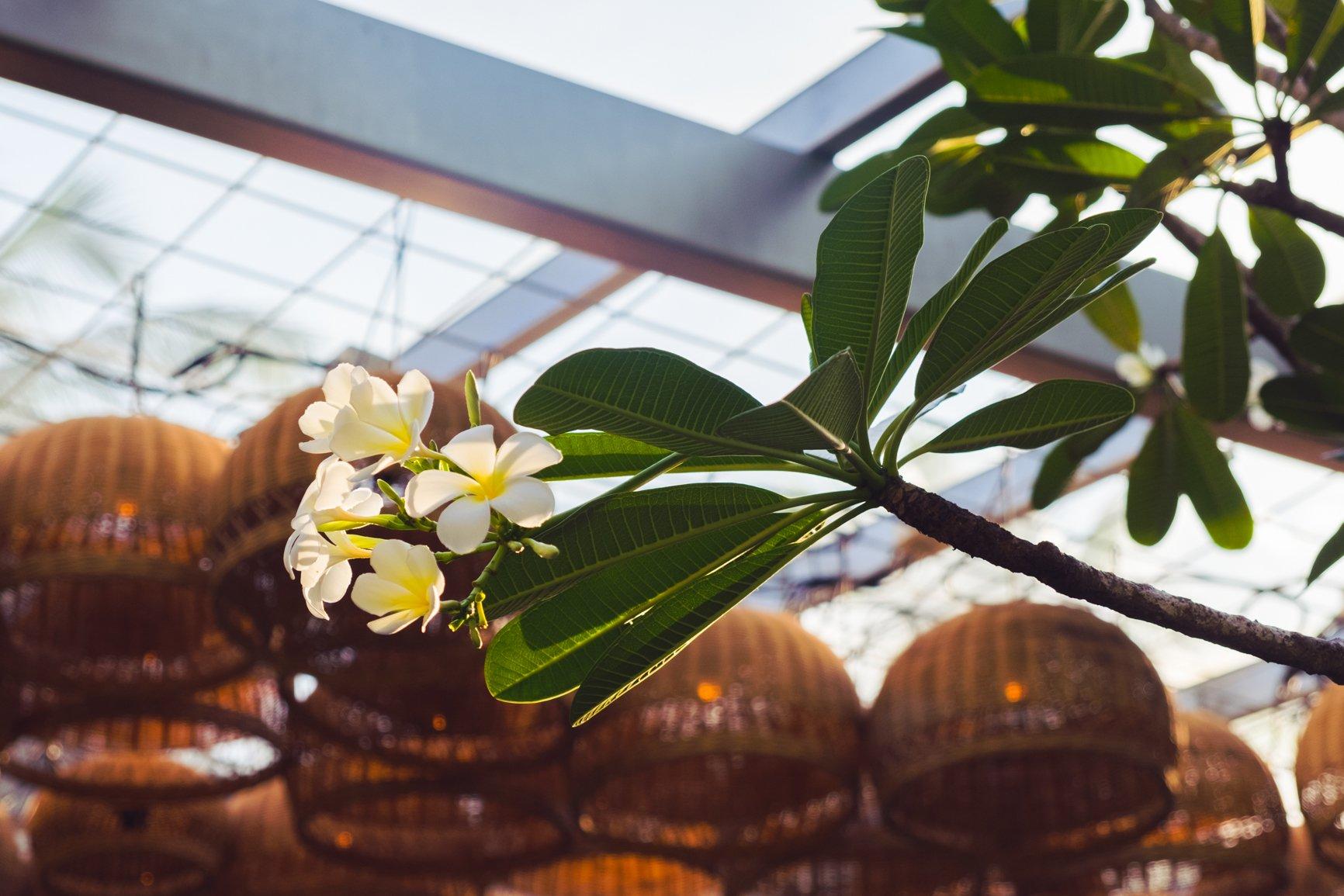 sunkissedblush-sunkissedblush-Elemis-Frangipani-Monoi-Salt-Glow-Scrub-Frangipani-flower (1 of 1)