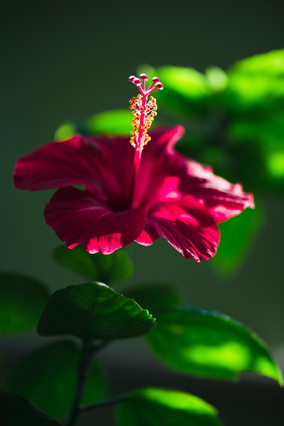 sunkissedblush-sunkissedblush-Elemis-Frangipani-Monoi-Salt-Glow-Scrub-hibiscus (1 of 2)